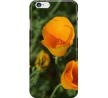 California Poppies - view from above iPhone Case/Skin