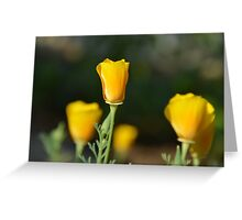 California Poppies - view from aside Greeting Card