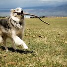 Playing with Sticks by Vendla
