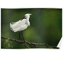 Snowy Egret II Poster