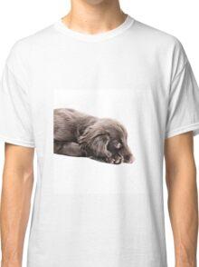 Sulky Spaniel Classic T-Shirt
