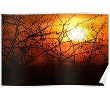 Acacia Sunset - Etosha National park Poster