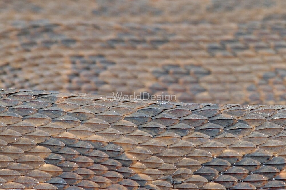 Scales of a Water Snake by William C. Gladish, World Design