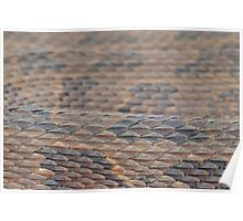 Scales of a Water Snake Poster
