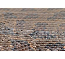Scales of a Water Snake Photographic Print