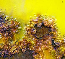 They Call Me Mellow Yellow by DebraLee Wiseberg