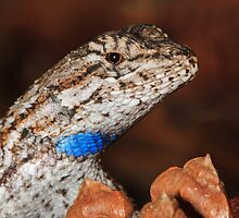 Fence Lizard by William C. Gladish