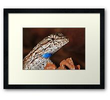 Fence Lizard Framed Print