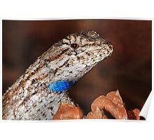 Fence Lizard Poster