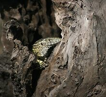 Who's there - Lizard in Chobe National Park by Ouzopuppy