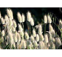 Wild flora 9011 Photographic Print