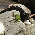 No More Fleas on Me-Anole by JeffeeArt4u