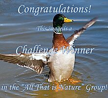 All That is Nature Challenge Winner Banner by GraceNotes