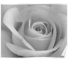 Yellow Rose - Black & White Poster