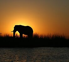 Ahh Africa- Chobe National Park by Ouzopuppy