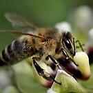 Year of the Honeybee  by Dennis Stewart