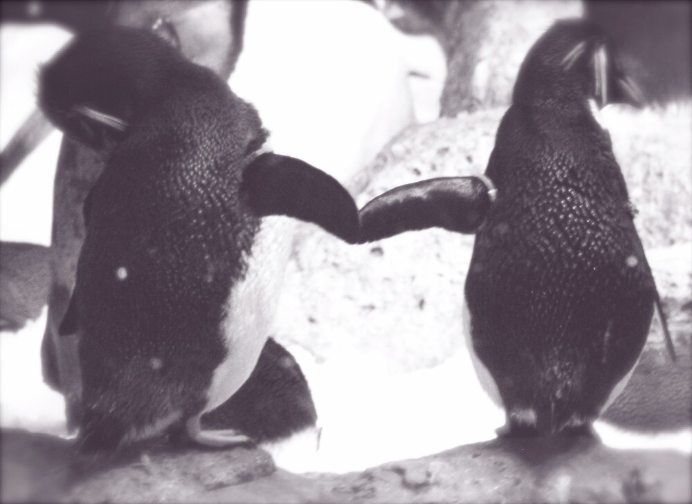 Penguins by mmcc0713