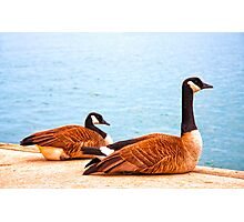 Once upon a Goose Photographic Print