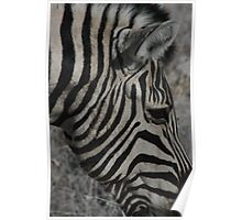 It's All Black and White to me!! - Etosha National Park Poster