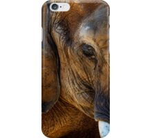 Wall of Elephant iPhone Case/Skin