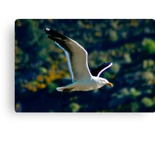 Wings of Freedom X  Canvas Print