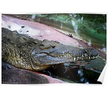 Florida Gator Poster