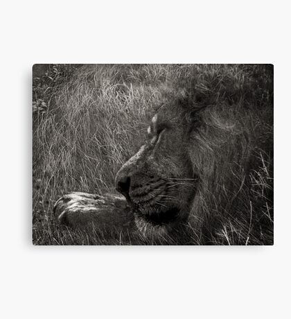 At One With Nature #3 Canvas Print