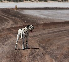 Hurry Up - Smirnoff the Dalmation by Ouzopuppy