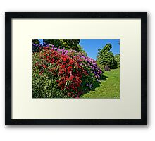 Stunning Rhododendrons Framed Print