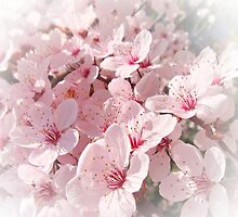 Cherry Blossom Time by Eugenio