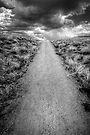 Thunder Trail by Bob Larson
