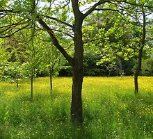 Buttercup meadow by miradorpictures