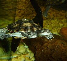 Long Neck Turtle by Sharon Brown