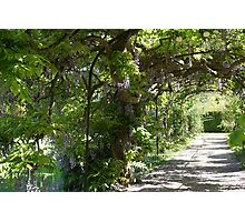 Wisteria Walk Photographic Print