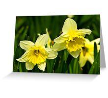 Daffodills #3 Greeting Card