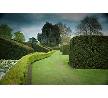 The Long and Winding Hedge:-) Photographic Print