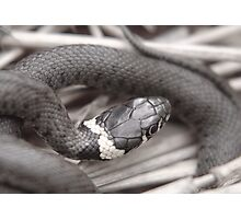 Don't slither away!! Photographic Print