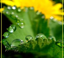 Morning Dew Drops by Eugenio