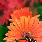 Petals Party  by Eugenio