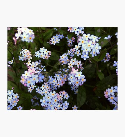 Little blossoms Photographic Print