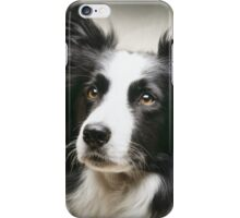 Working Border Collie iPhone Case/Skin