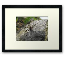 Happy In The Sunshine Framed Print