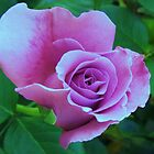 purple rose by ANNABEL   S. ALENTON