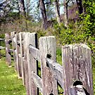 The Wooden Fence by Dave & Trena Puckett
