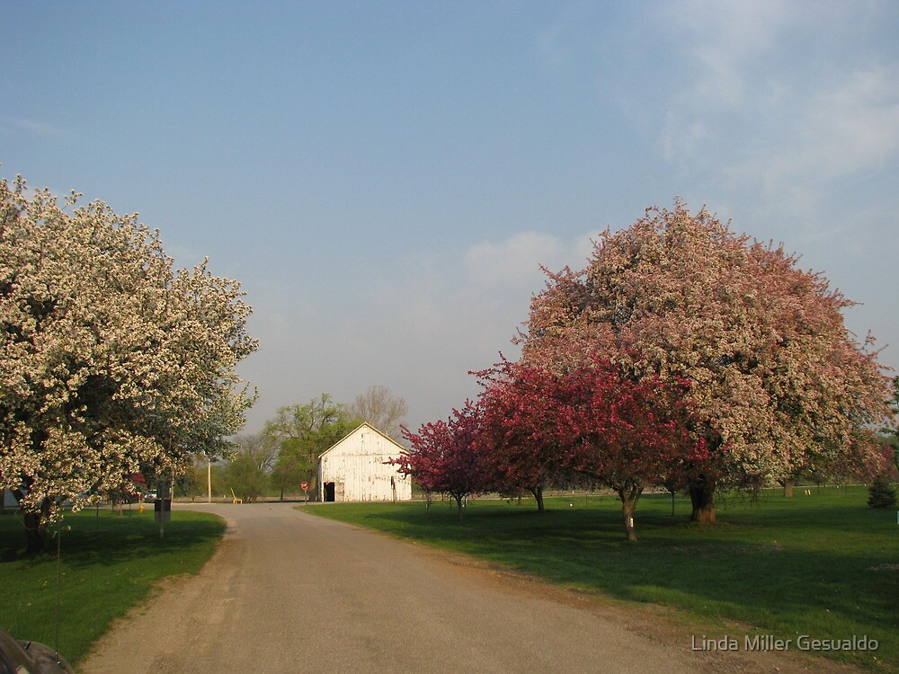 Down That Country Road by Linda Miller Gesualdo