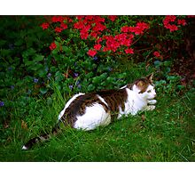 Max on the Prowl Photographic Print