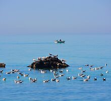 The Birds and the Sea and the Boat by Lena127