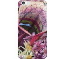 Pitcher Plant iPhone Case/Skin