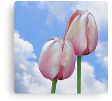 Pink Tulips Blue Sky Canvas Print
