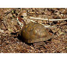 Trail Turtle Photographic Print
